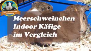 Meerschweinchenkäfig-Indoor
