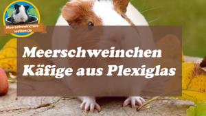 Meerschweinchenkäfige aus Plexiglas